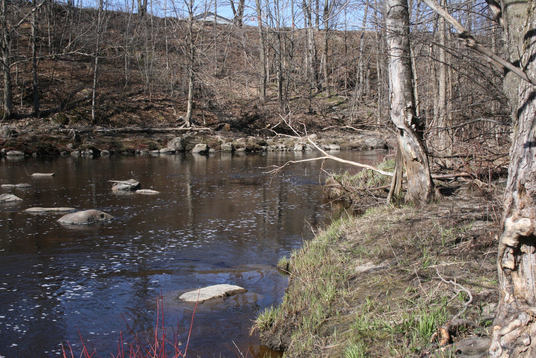 Bureau Bois Habitat : Intendance de lhabitat de la tortue des bois dans la zone de la